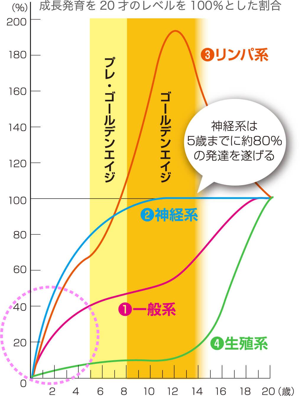 スキャモンの発達・発育曲線
