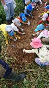 2018923稲刈り芋掘り_180924_0002