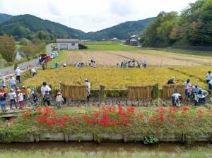 9/23日稲刈りと芋掘り_180924_0294